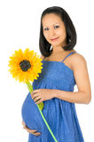 Pregnant girl Royalty Free Stock Image