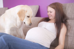 Pregnant Girl with a dog Stock Photo