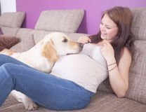 Pregnant Girl with a dog Stock Image