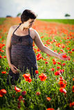 Pregnant happy woman in a flowering poppy field Stock Images