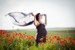Pregnant happy woman in a flowering poppy field Stock Image
