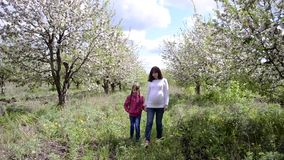 Pregnant mom leads for his daughter`s hand in the blossomed spring Park. Family walk in blossoming Apple garden in. Pregnant mom leads for his daughter`s hand in stock footage