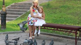 Pregnant mother and daughter feed pigeons. In summer park stock video footage