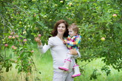 Pregnant mother and her baby daughter picking apples Stock Photography