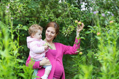 Pregnant mother picking apples with her baby daughter Stock Photo