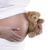 Pregnant tummy and teddy bear Stock Image