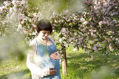 Pregnant woman in the apple orchard is holding tummy and apple blossoming branch royalty free stock photography