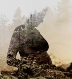 Pregnant woman combined with nature. Double exposure. Silhouette of pregnant woman combined with forest stock photo