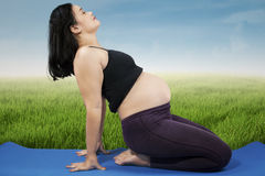 Pregnant woman doing exercise 1 Royalty Free Stock Photography