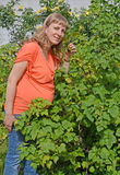 The pregnant woman eats black currant from a bush Royalty Free Stock Photo