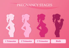 Pregnant woman - first, second and third trimester Royalty Free Stock Photo