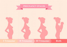 Pregnant woman - first, second and third trimester. Vector illustration of pregnant female silhouettes. Changes in a woman's body in pregnancy. Pregnancy stages Stock Photo