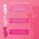 Pregnant woman - first, second and third trimester. Vector illustration of pregnant female silhouettes. Changes in a woman's body in pregnancy. Pregnancy stages Stock Photography