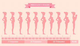 Pregnant woman - first, second and third trimester. Vector illustration of pregnant female silhouettes. Changes in a woman's body in pregnancy. Pregnancy stages Royalty Free Stock Image