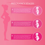 Pregnant woman - first, second and third trimester. Vector illustration of pregnant female silhouettes. Changes in a woman's body in pregnancy. Pregnancy stages Royalty Free Stock Photo