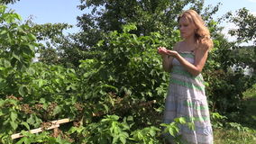 Pregnant woman gather and eat blackberry from twig in garden stock video footage