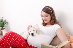 Pregnant woman with her dog at home Stock Photography