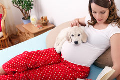 Pregnant woman with her dog at home royalty free stock image