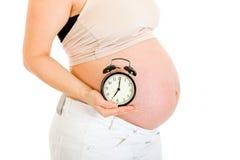 Pregnant woman holding alarm clock. Close-up. Royalty Free Stock Photo