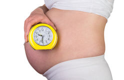 Pregnant woman holding alarm clock Royalty Free Stock Images