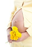 Pregnant woman holding dandelion Stock Photography