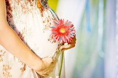 Pregnant woman holding her belly and flower Royalty Free Stock Images