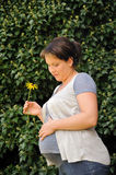 Pregnant woman holding her belly and yellow flower Royalty Free Stock Photos