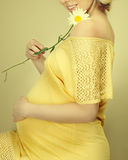 Pregnant woman holding spring flowers Stock Photo