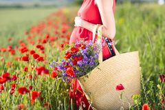 Pregnant woman outdoors at poppy field. Pretty pregnant woman outdoors at poppy field Stock Image