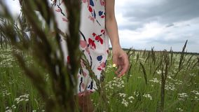 Pregnant woman picking camomile flowers. Pregnant woman picking camomile flowers on summer meadow stock footage