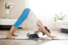 Pregnant woman and puppy practicing dog yoga pose at home Stock Photos