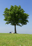 Pregnant woman reading under a tree. Woman reading in the sunshine under the shade of a lone tree Stock Photos