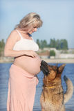 Pregnant woman and sheep-dog Stock Photos