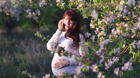 Pregnant woman talking on phone in blooming apple orchard, girl walks in the blossomed spring Park. Pregnant woman talking on phone in blooming Apple orchard stock video footage
