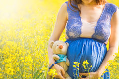Pregnant woman and teddy toy in canola field Stock Photo