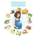 Muslim pregnant woman. Vector colorful illustration with pregnancy concept.Pregnant woman. Vector colorful illustration with pregn. Pregnant woman. Vector Stock Photography