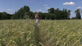 Pregnant woman walk barley plants in agricultural field stock video