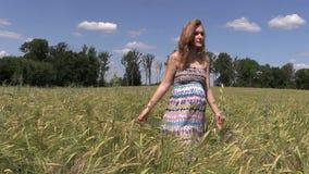Pregnant woman walk between ripe barley plant crop ears stock video