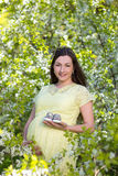 Pregnant Woman With Little Shoes In Blooming Cherry Garden Stock Photography