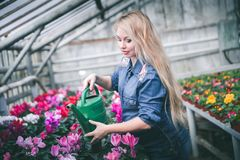 Pregnant woman working with flowers at greenhouse. stock photography