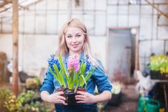 Pregnant woman working with flowers at greenhouse. royalty free stock photo