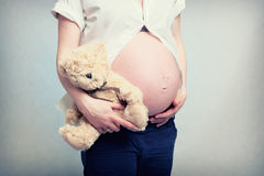 Pregnant women belly with teddy Royalty Free Stock Image