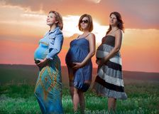 Pregnant women are at sunset. Three pregnant women are in the nature sunset Royalty Free Stock Image