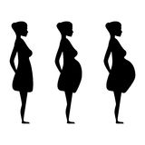 Pregnant women in the three trimesters. Silhouette of a pregnant woman in the three trimesters. Pregnancy stages Royalty Free Stock Photos