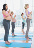 Pregnant women in yoga class standing in tree pose eyes closed Royalty Free Stock Images