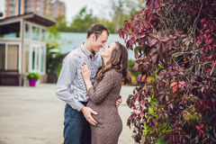 A pregnant young woman and her husband. A happy family standing at the red autumn hedge, holding belly. pregnant woman relaxing in Royalty Free Stock Photography