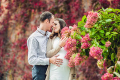 A pregnant young woman and her husband. A happy family standing at the red autumn hedge, smelling a flower hydrangea. pregnant wom Stock Photos