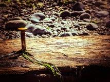 Prego em uma placa na praia foto de stock