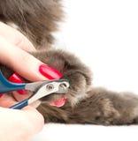 Pregos do gato do aparamento Fotos de Stock Royalty Free
