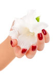 Pregos e dedos bonitos foto de stock royalty free